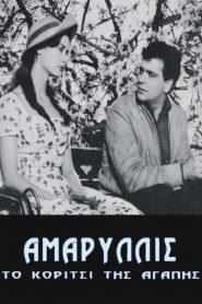 Αμαρυλλίς, Το κορίτσι της αγάπης (1959)